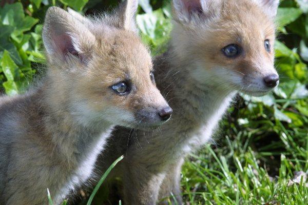 Welcome to Roanoke Wildlife Rescue